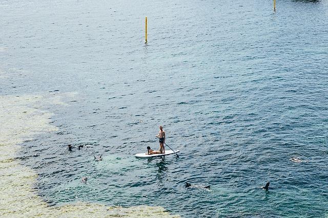 paddle à 2